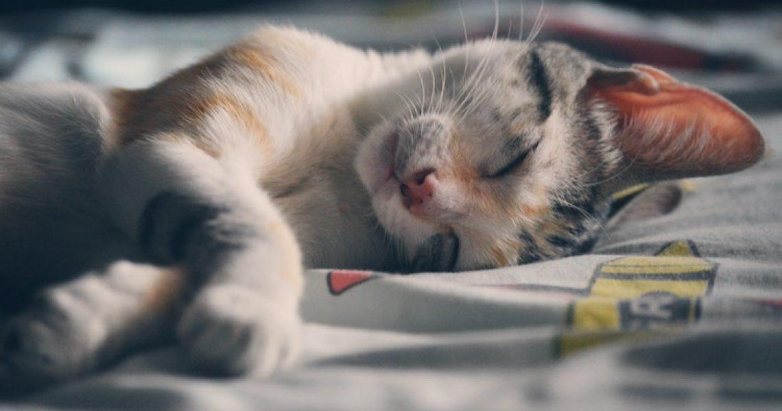 adorable-animal-beautiful-Newsletter