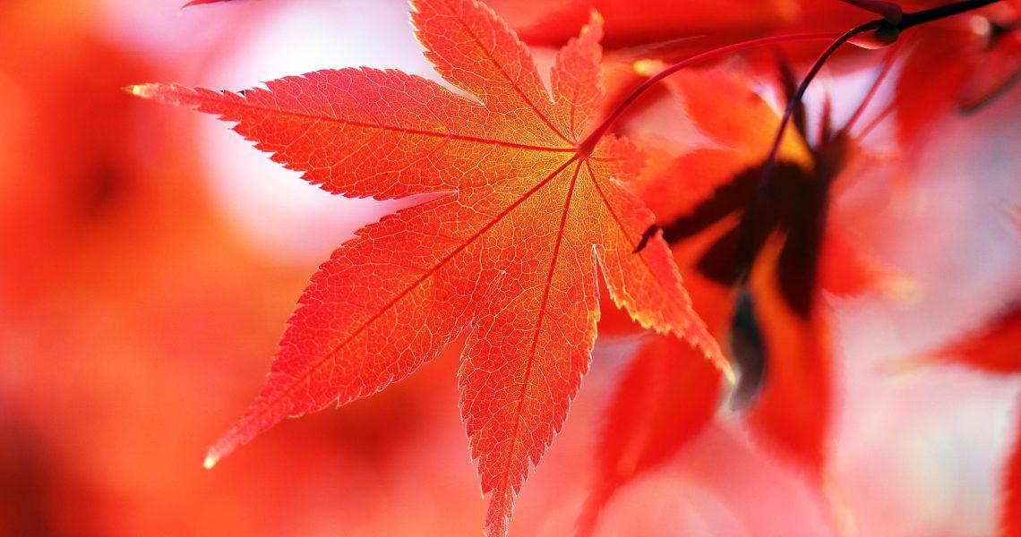 autumn-3797633_1920