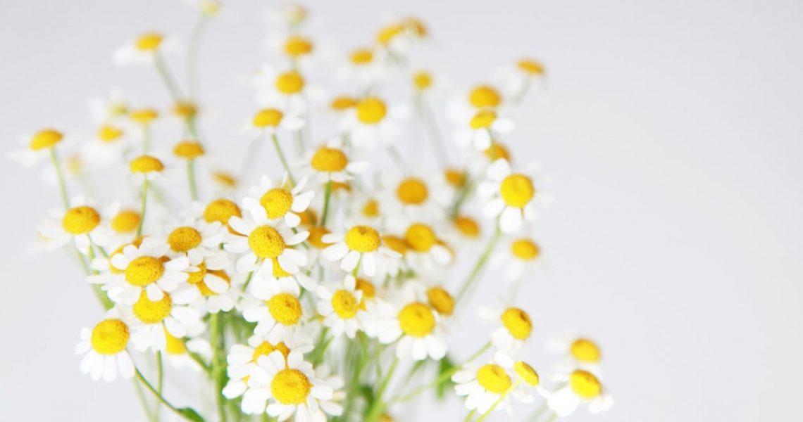 close-up-photo-of-white-flowers-3686922_Newsblog