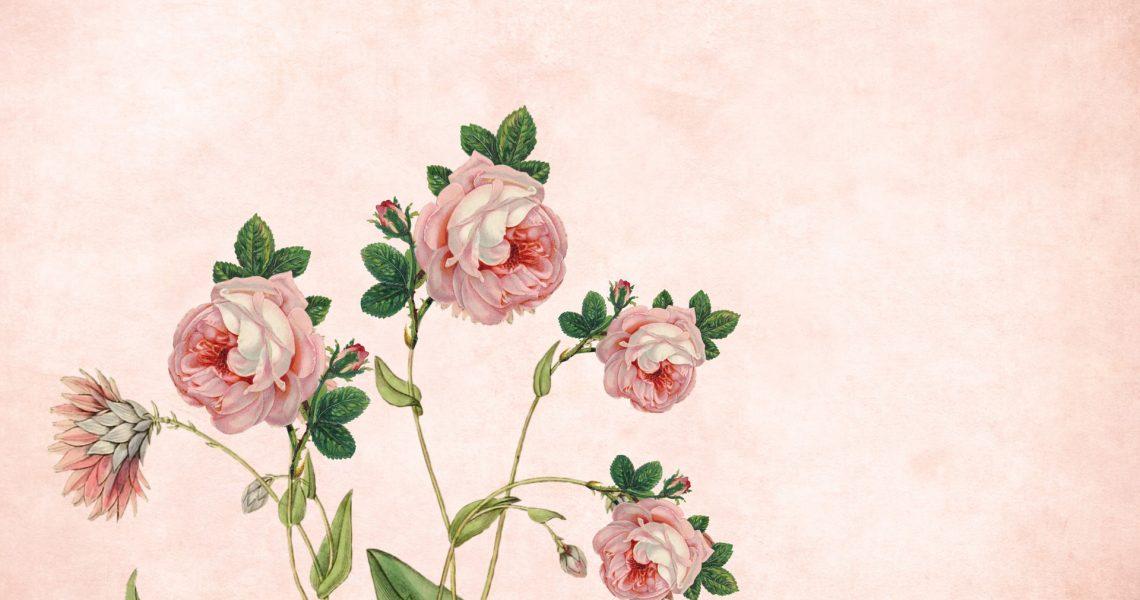 flower-4227021_1920