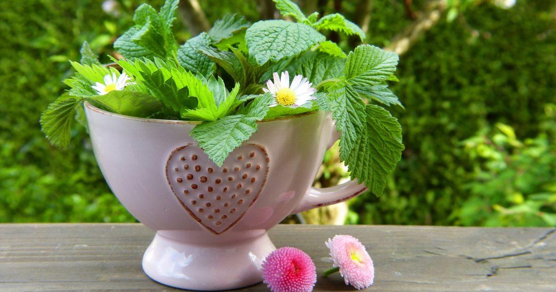 herbs-2232640_1920