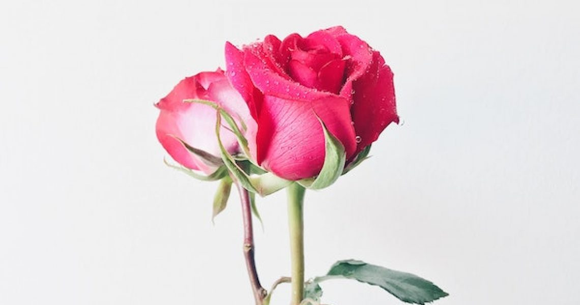 photo-of-pink-roses-in-vase-1517358